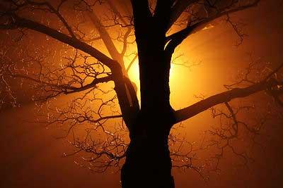consanguinity affinity and spiritual relationship god